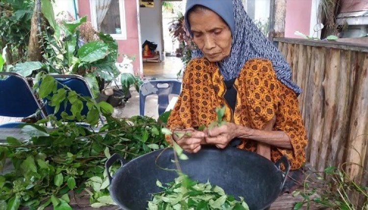 Perjalanan Mencari 44 Daun Ie Bupeudah di Bukit Nusa