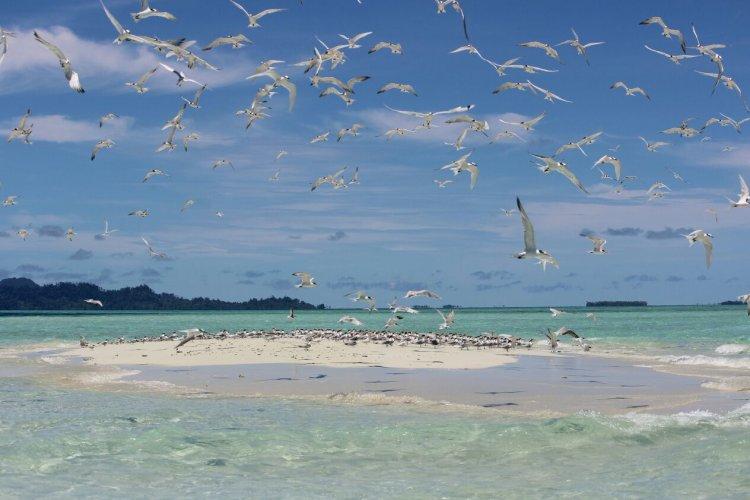 Mendengar Kicauan Camar dari Pulau Baby Island